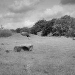 Landschaft mit einem rekonstruierten Megalithgrab im Steinzeitpark Albersdorf.