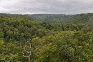 Die Wälder im Selketal. Eine wunderschöne Gegend.